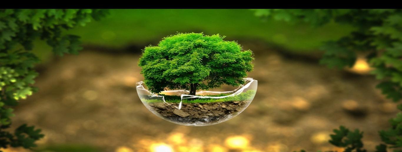 Utilizamos soluciones basadas en la naturaleza, reduciendo los gases de efecto invernadero y activando sumideros naturales de carbono